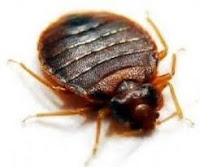 Eradicating bed bugs from your home
