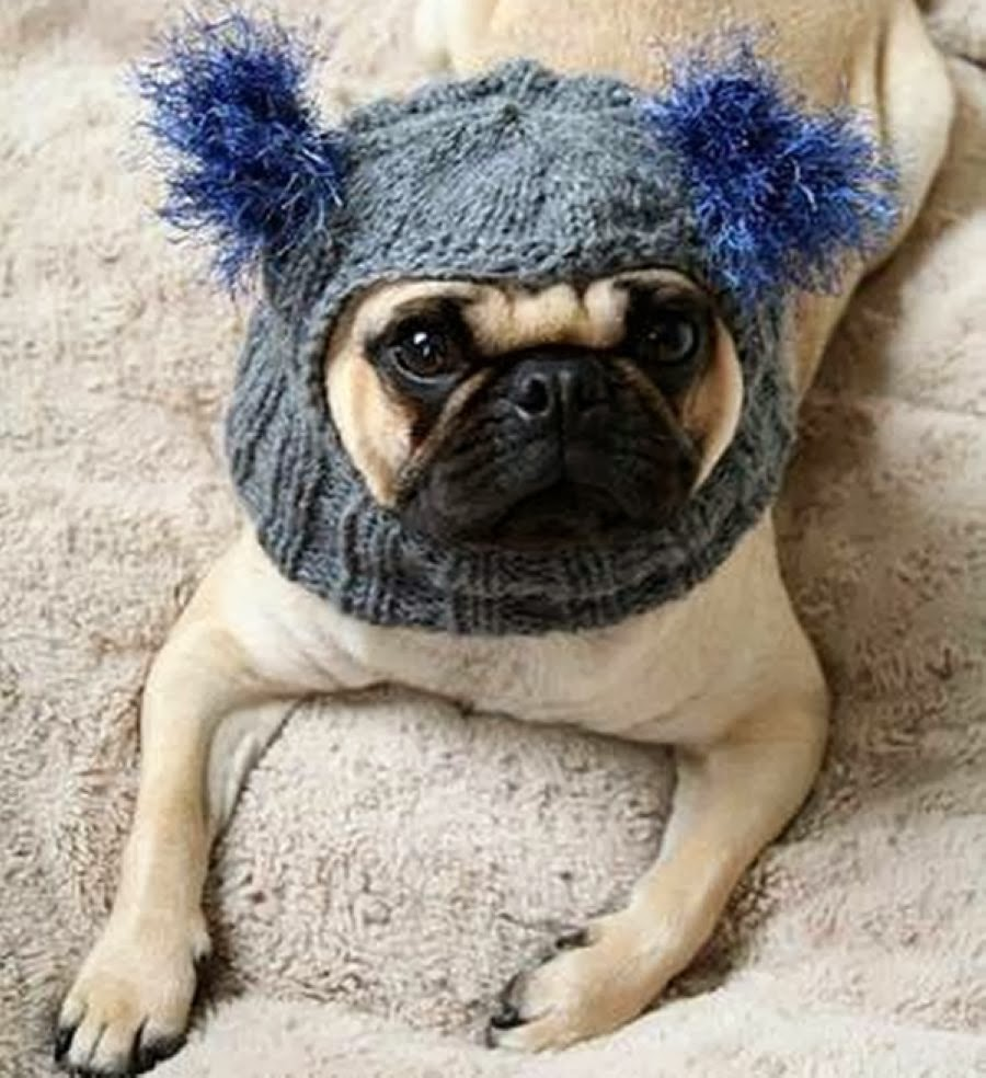 20 Adorable Hats Your Pug can Rock this Winter - Best Photography ... 6dbab39d5fc