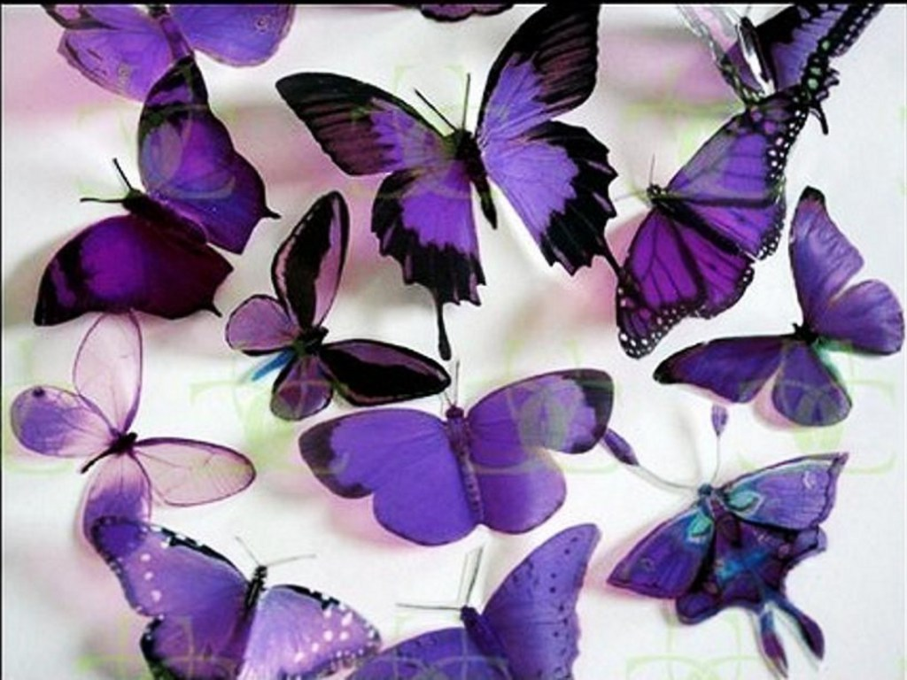 Cute Pink Girl Cartoon Wallpaper News Butterfly Purple Butterfly Wallpaper