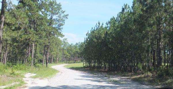 H. Cooper Black Jr Memorial Field Trial and Recreation Area