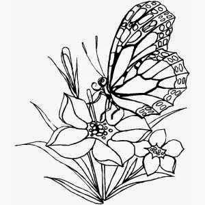 Terbaru 11 Gambar Sketsa Flora Fauna Dan Alam Benda
