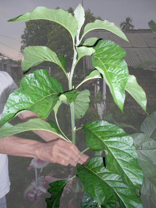 Macam-macam Obat Herbal dan Khasiatnya