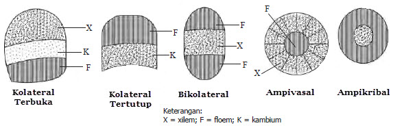 Tipe Berkas Pembuluh pada Tumbuhan