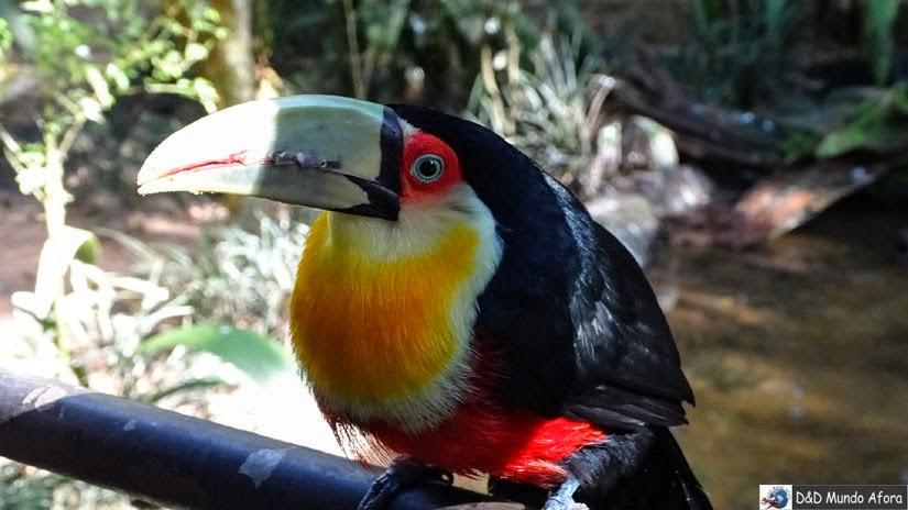 Parque das Aves - Foz do Iguaçu - Paraná