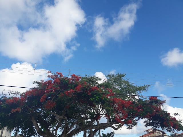 DIÁRIO DE BORDO: VERÃO NA BAHIA, SHOW, PRAIA E SOL