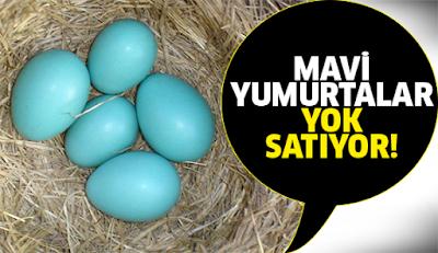 Mavi Yumurta Yumurtlayan Tavuk Fiyatları Ne Kadardır?