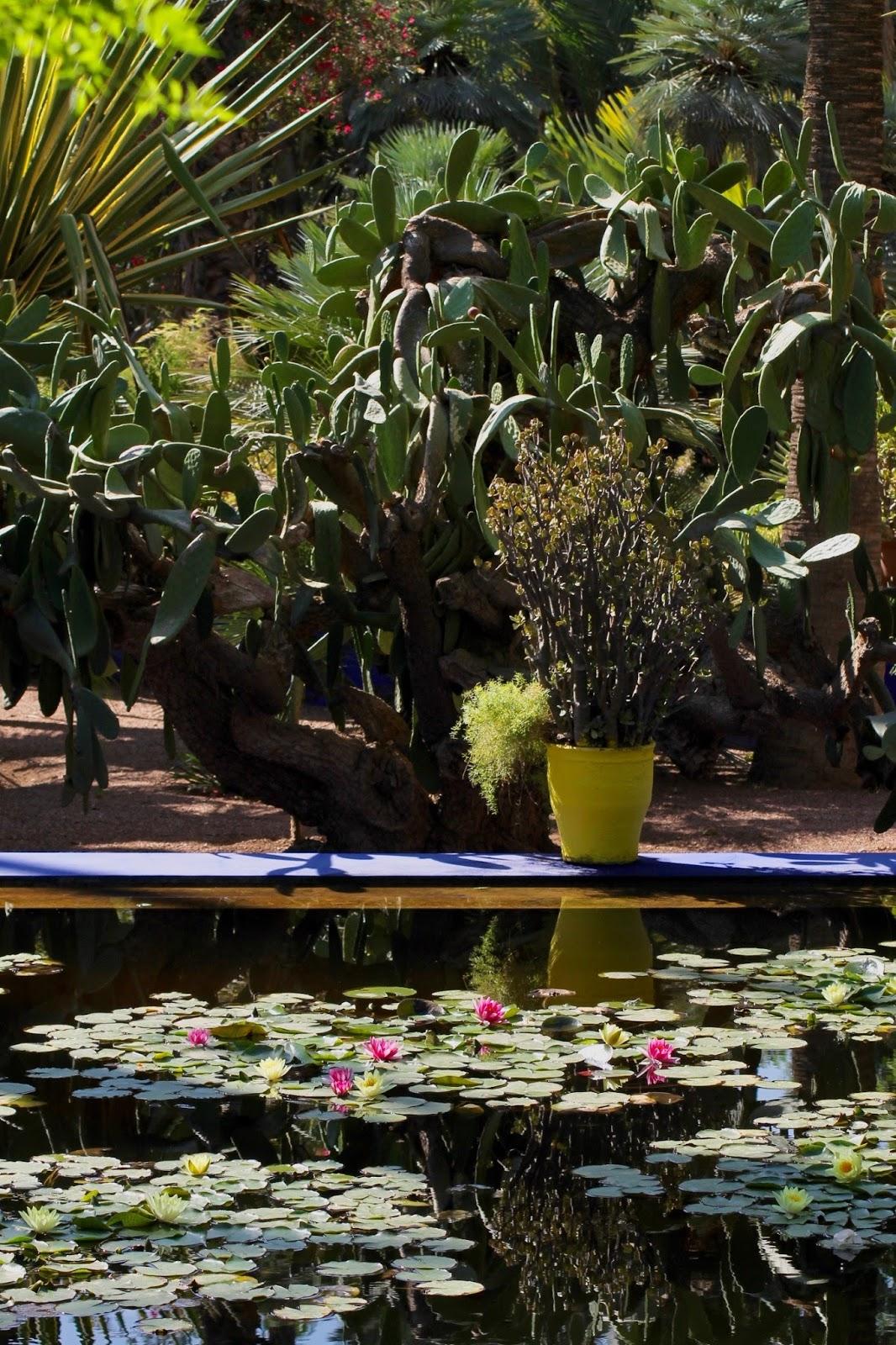Majorelle Garden Greenery Marrakech