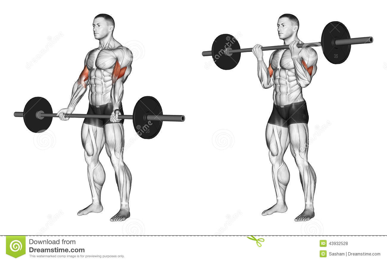 The Big Biceps Workout Develop Huge Biceps Multiple Fitness