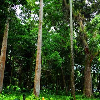 Árvores do Parque Lage, no Rio de Janeiro