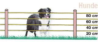 Villanypásztor rendszerek kutyák számára