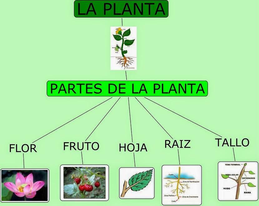Cultura guaran importancia de las plantas en el ecosistema for Importancia de los viveros forestales