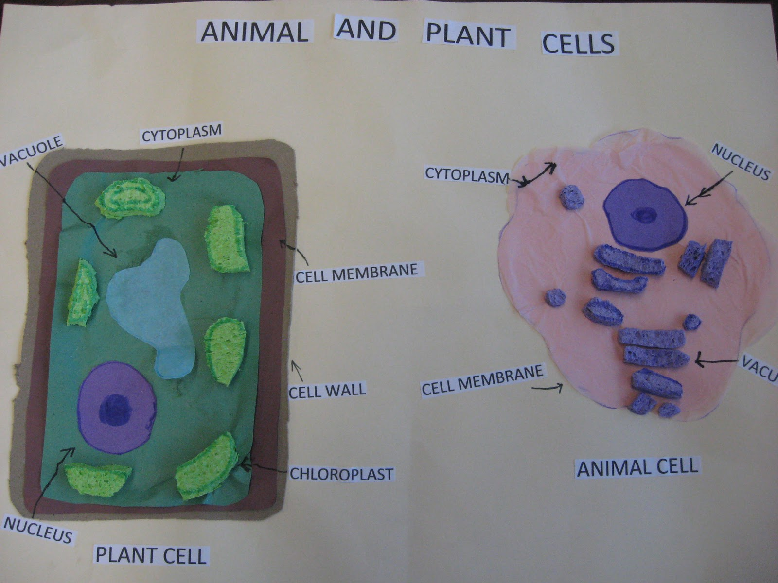 Third Grade Smarties Animal And Plant Cells