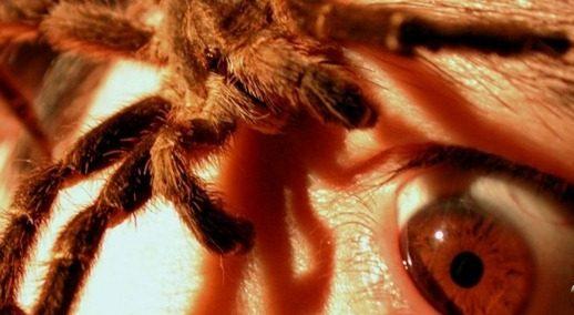 Aranha vivendo em seu ouvido