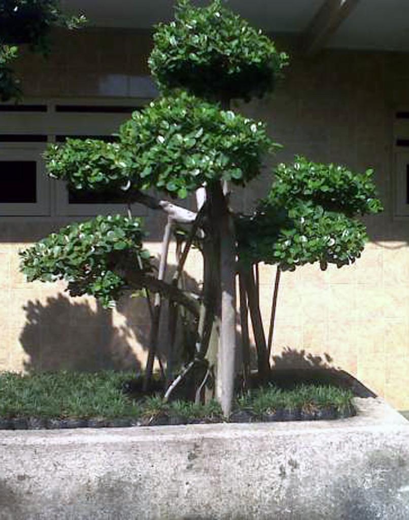 95+ Desain Taman Rumah Jepang Gratis Terbaru