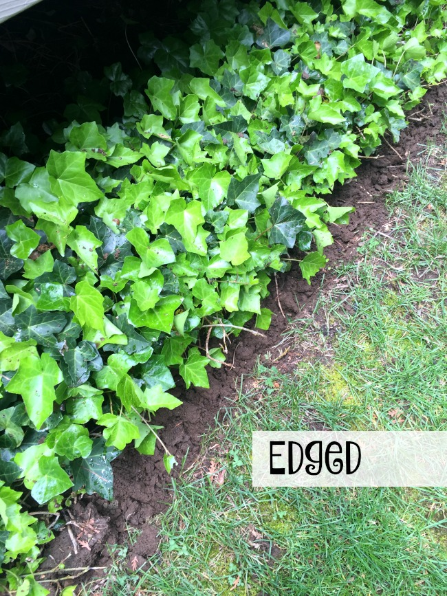 Edged ivy and grass