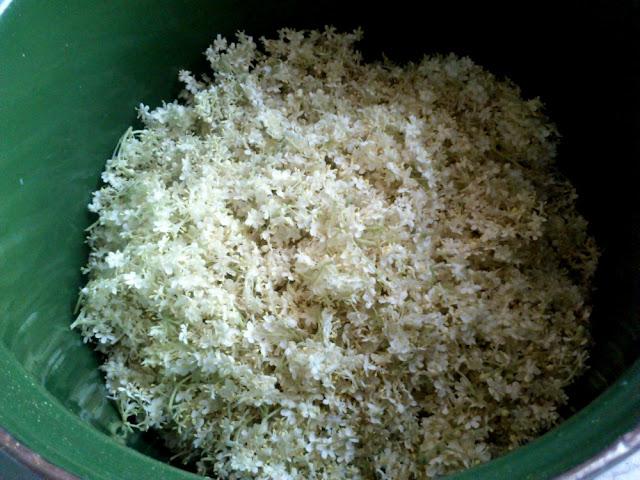 przygotowanie syropu z kwiaów czarnego bzu