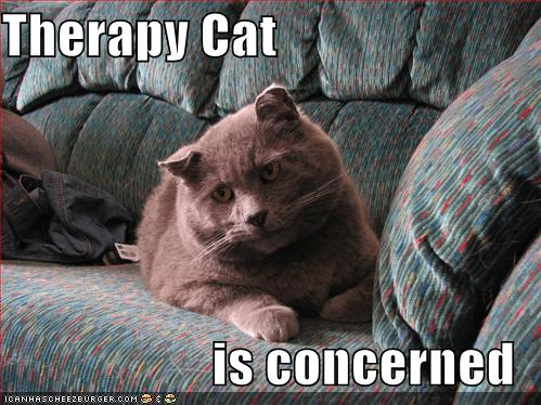 Therapy Cat is Concerned