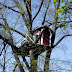Tree House Ideas: DIY Plans for a Tree House - Have Fun Building these Tree Houses with Your Kids