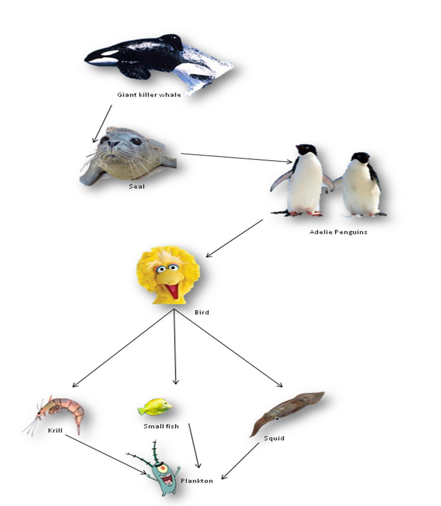 emperor penguin food chain - photo #15