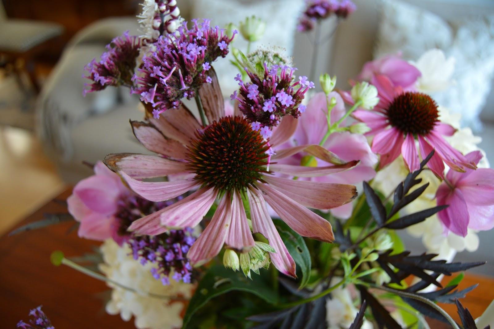 herlig hvit og rosa purpursolhatt echinacea i flere. Black Bedroom Furniture Sets. Home Design Ideas