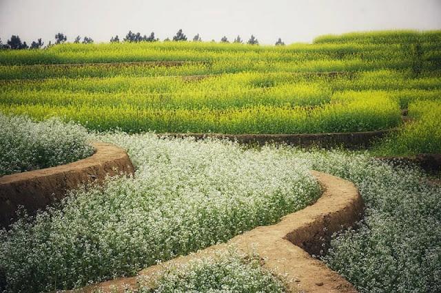 Explore The Rice Terraces Northwest In The Heart Of Hanoi 2