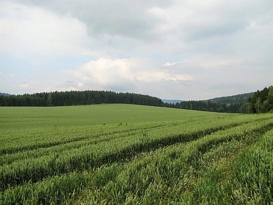 Wzgórza Ścinawskie.