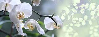 Gambar bunga anggrk Untuk Cover  Facebook