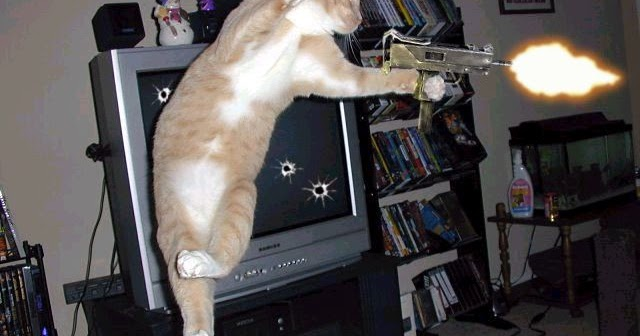 Funny animal pictures with weapons - Pictures of funny animals with guns ...