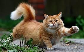 Apa Benar Membawa Sial Jika Tidak Sengaja Menabrak Kucing?   .