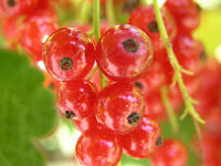 Nutrisi Buah Cranberry