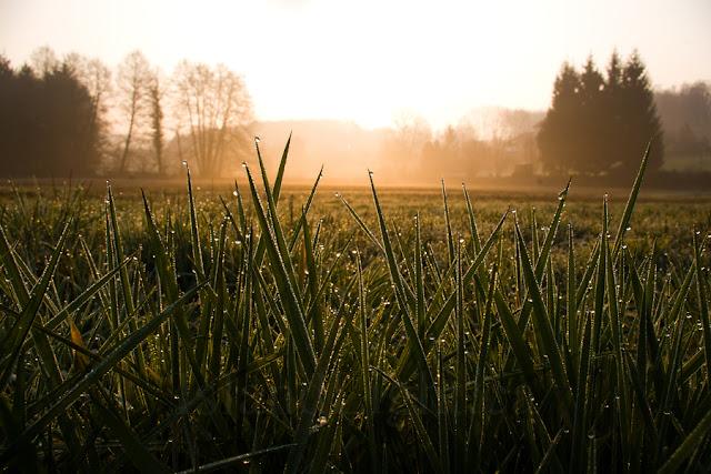 ¿Cómo sobrevivirías si te pierdes en un ambiente natural?