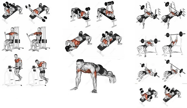 8 Best Exercises to Develop a Mighty Chest Fast