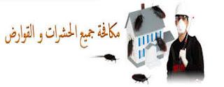 مكافحة الفئران بالدمام