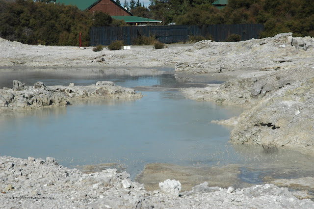 The mud of Rotorua  anneharrison.com.au
