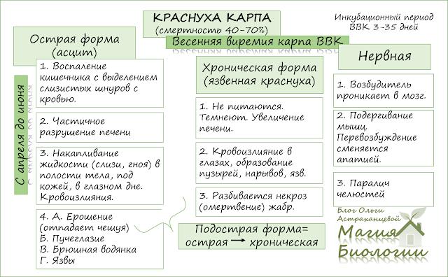 эпизоотия-краснуха-карпа-ВВК-магия-биологии