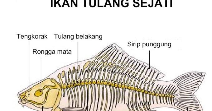 Download Ppt Ppt Vertebrata Biologi Edukasi Belajar Sains Biologi