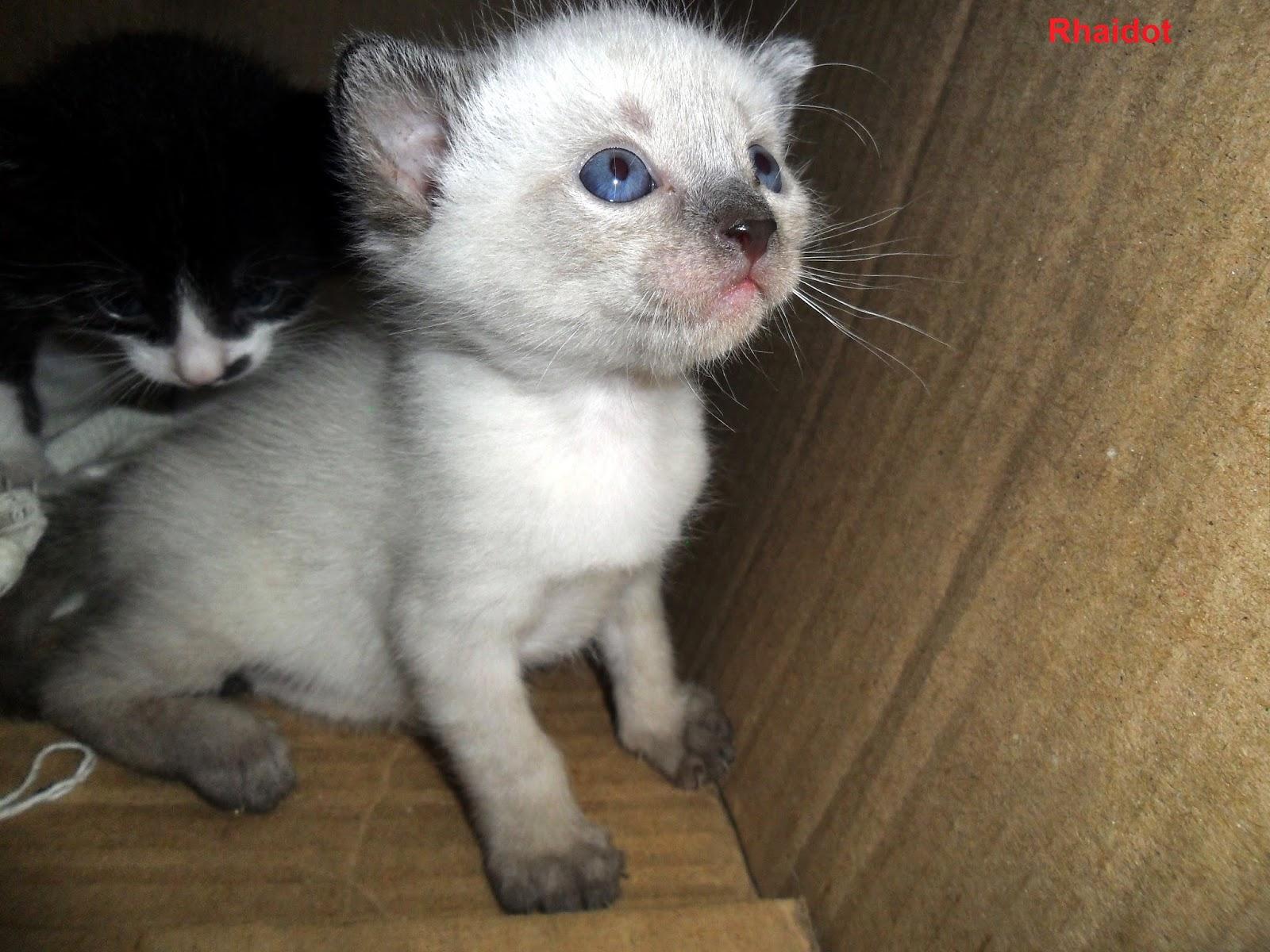 Bebe Gato Blanco