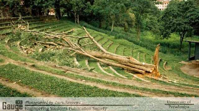 Robarosiya Tree Peradeniya University Cut Down Sri Lanka