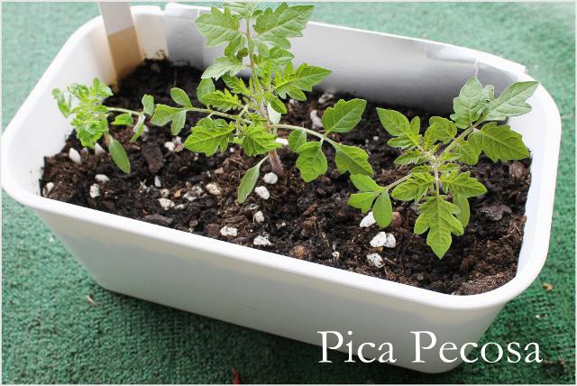 cesto-plastico-ikea-reciclado-en-maceta-diy