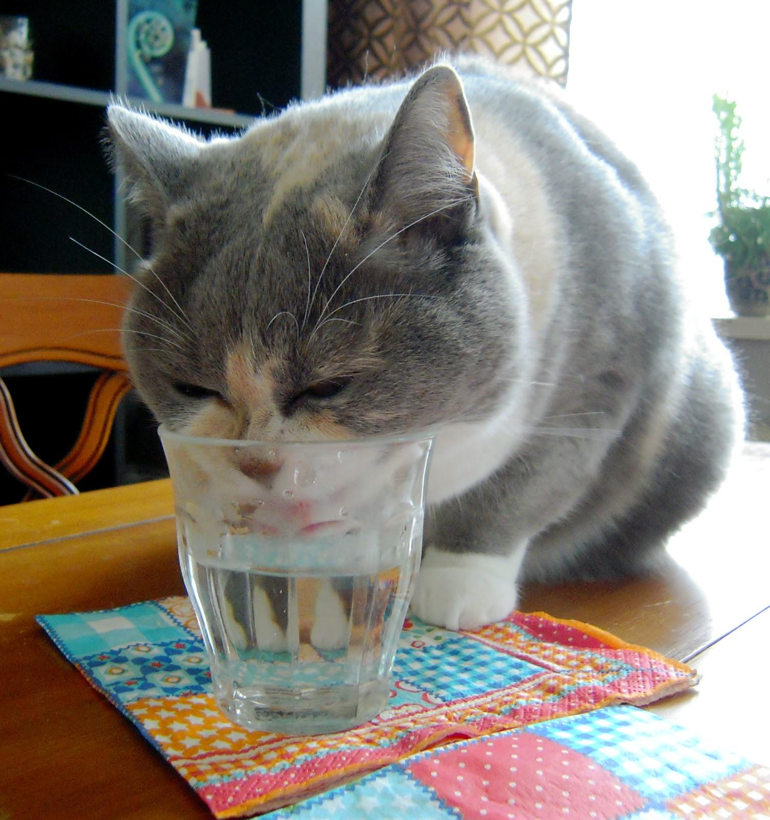 Cat Keeps Dropping Poop