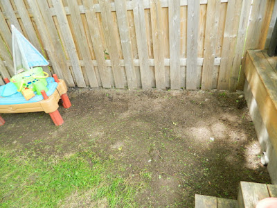 Upper Beaches backyard cleanup after Paul Jung Gardening Services Toronto