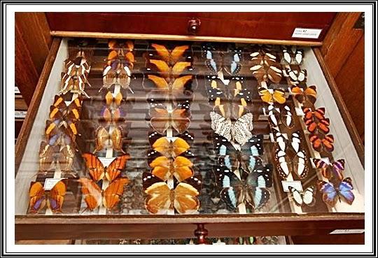 muzeul-antipa-bucuresti-fluturi
