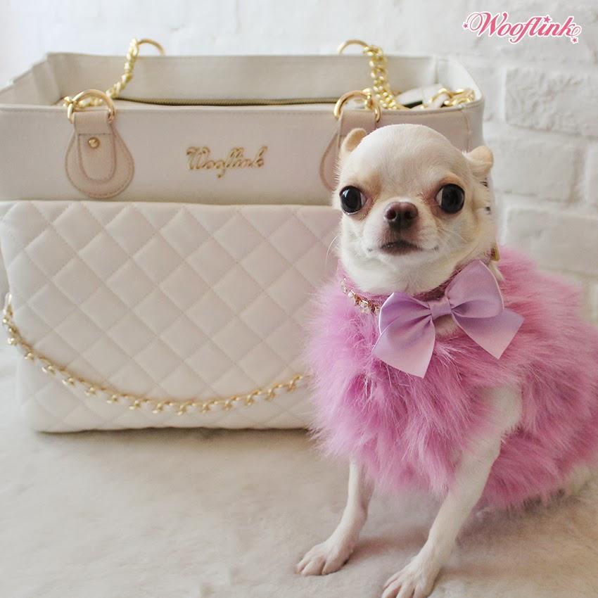 chiwawa dachshund mix How Sweet, Maybe My next pet ...