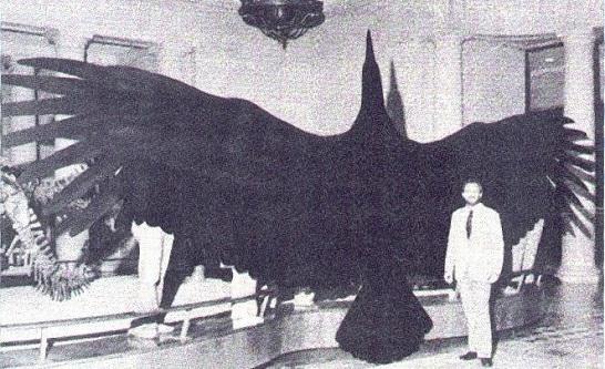 Keşfedilmiş En Büyük Kuş Argentavis Magnificens
