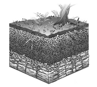 Materi Tentang Pedosfer Dan Litosfer