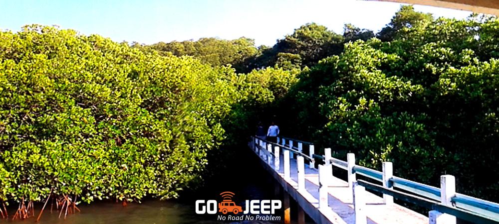 jalur jelajah mangrove di taman nasional baluran