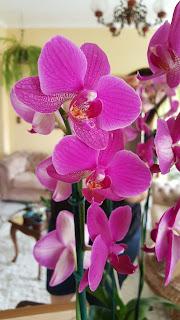 orquideas-com-flores-nutrientes