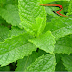 Demand Bites Mentha Oil Futures; Commodity Market