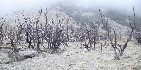 hutan mati gunung papandayan tempat wisata di garut