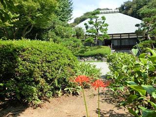 浄妙寺のヒガンバナ